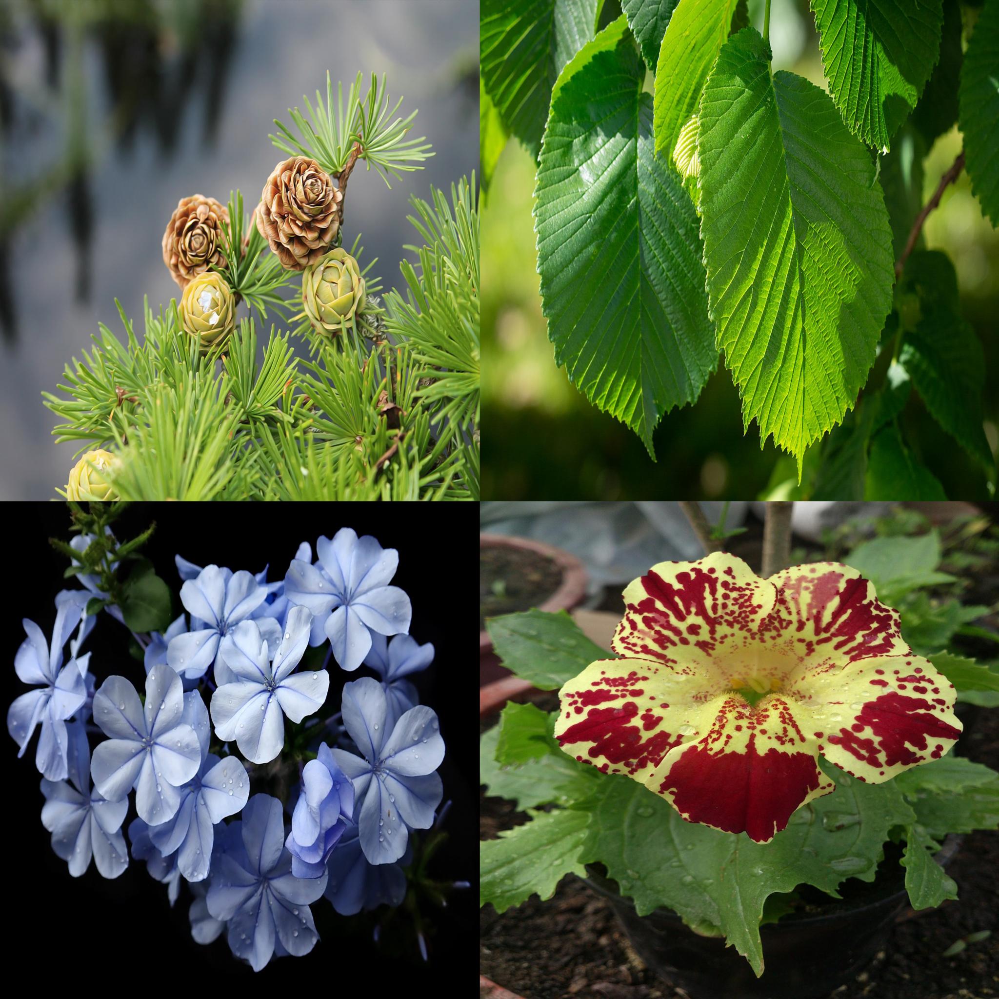 4 fleurs de Bach efficaces pour retrouver confiance en soi
